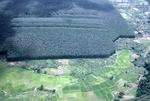 Rice paddies and rubber tree grove by Cayetano E. Barrera