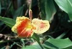 Pretty flower by pool at Quan-Loi by Cayetano E. Barrera