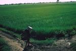 Vietnamese and rice paddy by Cayetano E. Barrera