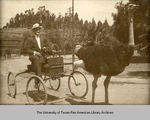 Photograph of John H. Shary on cart pulled by ostrich