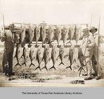 Photograph of John H. Shary, Bill Potter and Ralph G. Bray standing next to strung tarpon