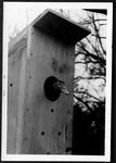 03 Black-Bellied Whistling-Duck in nesting box