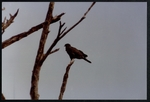 29 Large bird
