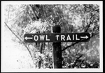 31 Owl trail sign