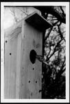 04 Black-Bellied Whistling-Duck in nesting box