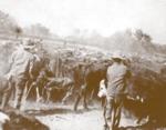 Herding cattle at Punta del Monte Ranch